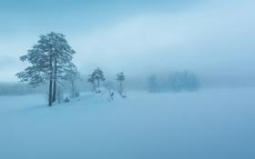 Картинка зима, снег, небо, деревья, туман