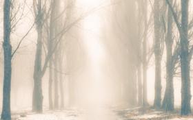 Обои зима, снег, деревья, природа, аллея