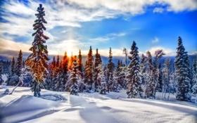 Картинка закат, лес, небо, облака, зима, горы, снег