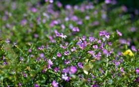 Картинка зелень, трава, макро, цветы, блики, размытость