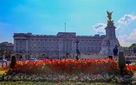Обои небо, цветы, Англия, Лондон, памятник, Букингемский дворец