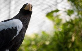 Обои крылья, ветка, клетка, клюв, Орел, eagle