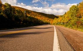 Обои дорога, песок, осень, лес, небо, асфальт, солнце