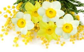 Обои белый, цветы, желтый, весна, white, yellow, flowers