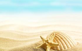 Обои summer, beach, sand, shells, seashells