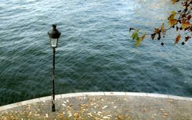Обои листья, город, река, фонарь