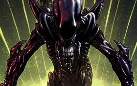 Обои Alien, Тварь, Чужой