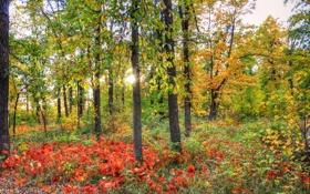 Картинка закат, лес, осень, трава, солнце, багрянец, листья