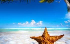 Картинка тропики, ocean, starfish, sand, sea, пляж, морская звезда