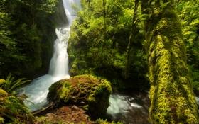 Обои США, лес, зелень, Oregon, мох, деревья, Bridal Veil Falls