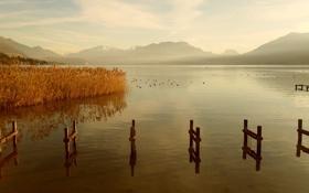 Обои вода, пейзаж, горы, природа, озеро, гладь, заросли