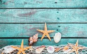 Картинка shells, starfish, mesh