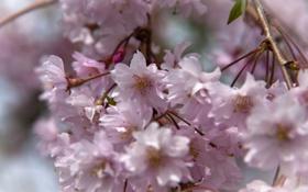 Картинка цветы, нежность, весна