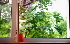 Обои зелень, деревья, окно, кружка, чашка