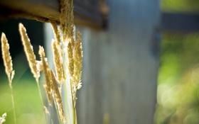 Картинка лето, макро, лучи, свет, природа, фото, забор
