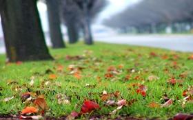 Картинка газон, осень, трава, посадки, размытость, деревья, дорога