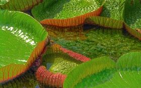 Обои листья, зелень, вода