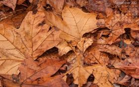 Обои осень, листья, листва, 2012, календарь, числа, ноябрь
