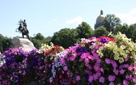 Обои памятник, Питер, цветы