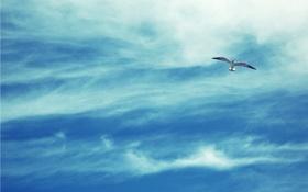 Обои небо, облака, фото, птица, чайка, полёт