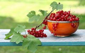 Обои garden, currants, Fruit, Garten