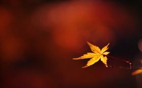 Обои осень, макро, листок, ветка