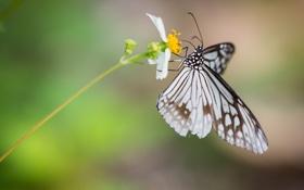 Картинка цветок, лето, бабочка