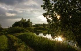 Обои лето, трава, закат, дерево, болото, вечер, кустарники