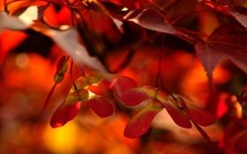 Обои листья, red, оранж, жилы