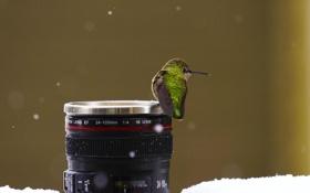 Картинка зима, снег, птица, кружка, обьектив