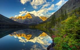 Картинка горы, озеро, отражение, кусты