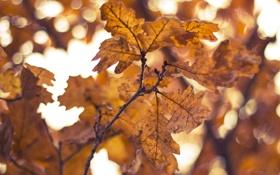 Картинка листья, желтый, осень, ветки