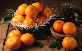 Обои мандарины, цитрусы, плоды