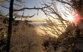 Картинка солнце, иней, зима, снег, лучи, ветка, дерево