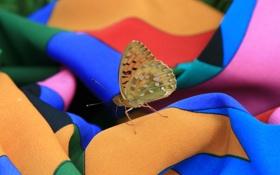 Картинка лето, макро, бабочка, платье, насекомое