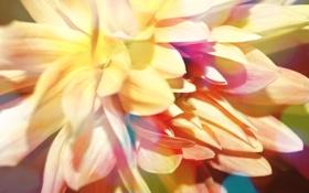 Обои листья, цветок, геогрин, настроение, лепестки, бутон, цветы