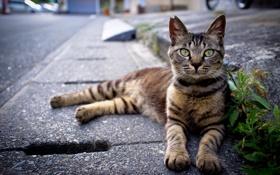 Обои дорога, кошка, кот, улица