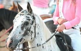 Обои лошадь, девушка, пятнистая, розовый, обои, фон, настроения
