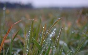 Обои капли, макро, поле, трава, фото