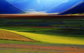 Картинка grass, flower, field, mountain, spring