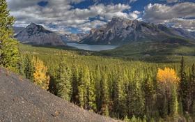 Обои лес, деревья, горы, озеро, Alberta, Canada, Banff