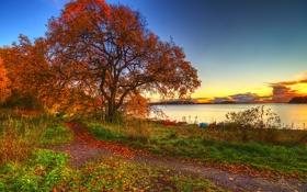 Обои осень, небо, трава, листья, пейзаж, закат, природа