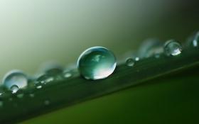 Картинка трава, вода, макро, лист, роса, капля