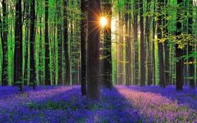 Обои лес, трава, солнце, лучи, деревья, цветы