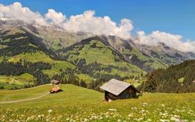 Картинка облака, долина, трава, солнце, холмы, деревья, Berner Oberland