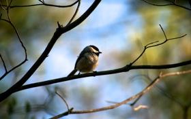 Картинка весна, солнце, птица, воробей, дерево, птичка, день