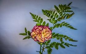 Обои цветок, листья, лепестки, гвоздика