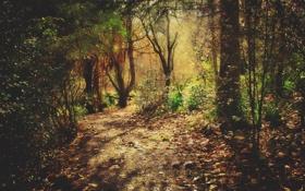Обои листья, деревья, природа, фото, дерево, леса