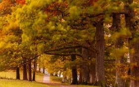 Картинка осень, лес, деревья, парк, тропинка