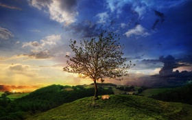 Обои трава, закат, дерево, вечер, холм, арт, лиса